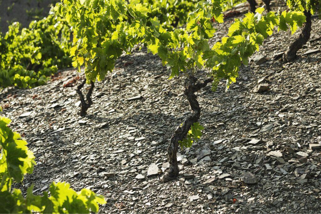Почвы ликорелла Приорат