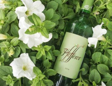 пфефферер вино 2018 отыв