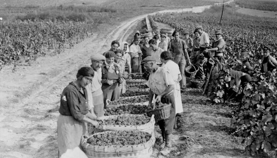 Виноделы против «винного фюрера»: шампанское во время войны