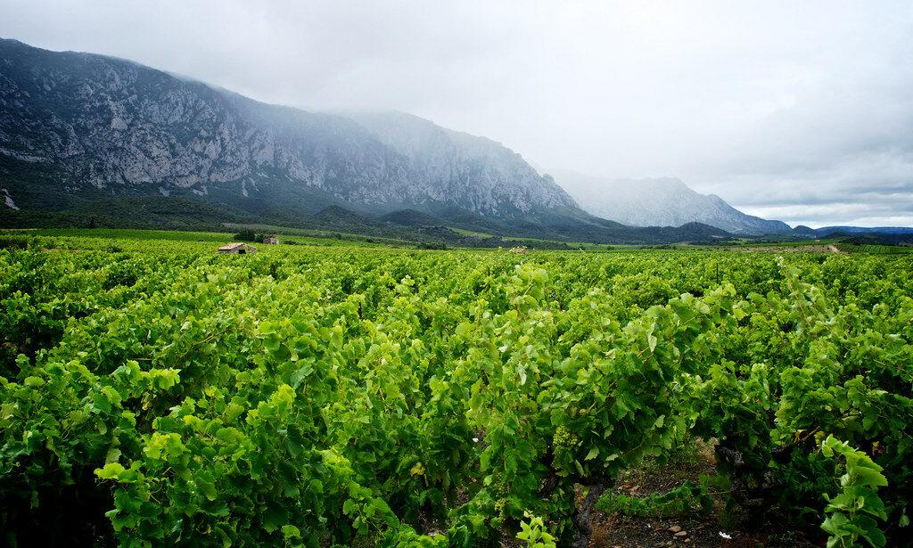 лангедок руссильон франция винодельческий регион