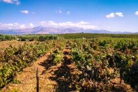 Куда податься на Крите? обзор виноделен